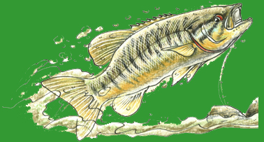 Fish Drawn by David Whitlock for Art.